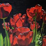 tulipes nyctalopes
